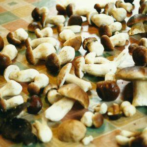 borowiki zabrodzie agroska