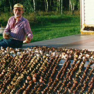 grzyby przed suszeniem zabrodzie agroska